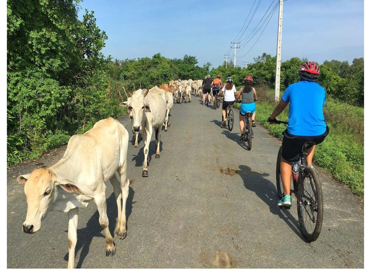 10 DAYS – VIETNAM CYCLE TOURS FROM HIGHLAND CENTRAL TO  COAST